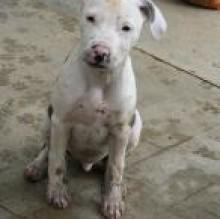 puppy101