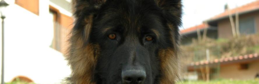 La cover di Wolf PT