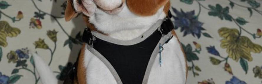 La cover di Spartaco Beagle