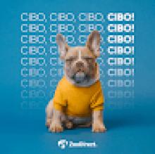 Zoodirect Italia's avatar